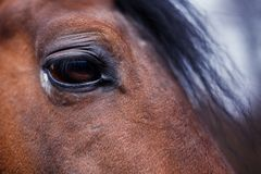 Dettaglio dell'occhio del cavallo Immagine Stock