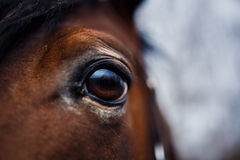 Dettaglio dell'occhio del cavallo Fotografie Stock