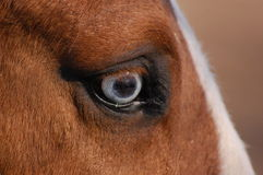 Dettaglio dell'occhio di vetro del cavallo Fotografia Stock Libera da Diritti