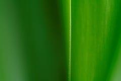 Dettaglio dell'yucca Fotografia Stock
