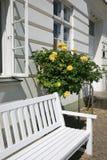 Dettaglio della Camera con il banco ed il cespuglio di rose bianchi Immagine Stock