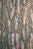 Dettaglio della corteccia di albero Fotografie Stock