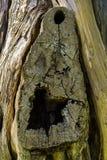 Dettaglio della corteccia di albero Immagine Stock Libera da Diritti