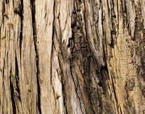 Dettaglio della corteccia di albero Immagini Stock