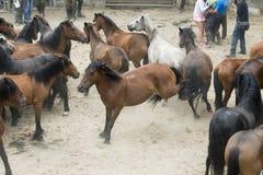 Dettaglio della fiera del cavallo, a Pontevedra Spagna fotografia stock