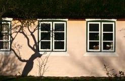 Dettaglio della finestra ed ombra dell'albero su una parete di un'isola della casa di Fano Fotografia Stock