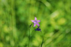 Dettaglio della fioritura del fiore Immagini Stock