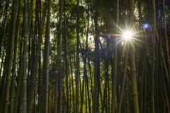 Dettaglio della foresta di bambù Immagini Stock Libere da Diritti