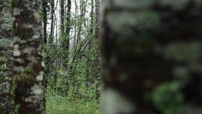 Dettaglio della foresta di Huilo Huilo, Cile stock footage