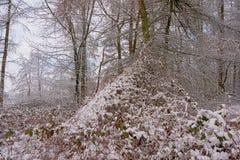 Dettaglio della foresta di inverno con i tronchi ed i rami di albero dell'abete ed arbusti coperti in neve fotografia stock libera da diritti