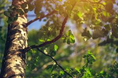 Dettaglio della foresta della sfuocatura con il fuoco selettivo Fotografia Stock