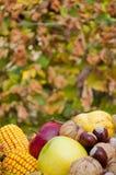 Dettaglio della frutta e delle verdure variopinte fresche di autunno fotografia stock libera da diritti
