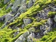Dettaglio della montagna Immagine Stock