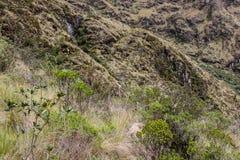 Dettaglio della natura non trattata nelle montagne delle Ande Fotografia Stock