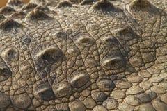 Dettaglio della pelle del coccodrillo immagini stock libere da diritti