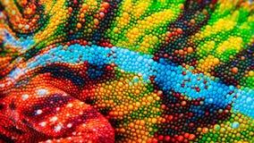 Dettaglio della pelle particolare di un camaleonte Fotografie Stock