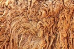 Dettaglio della pelliccia strutturato lama glama Fotografia Stock Libera da Diritti
