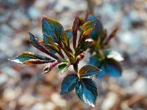 Dettaglio della pianta della primavera Immagine Stock