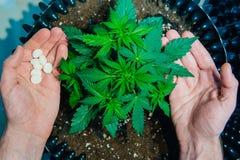 Dettaglio della pianta di marijuana della cannabis medico immagine stock libera da diritti
