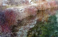 Dettaglio della riva della fiume-testa di Cetina immagine stock libera da diritti
