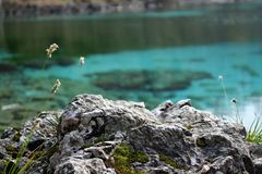 Dettaglio della roccia sul fondo incontaminato dell'acqua Fotografia Stock Libera da Diritti