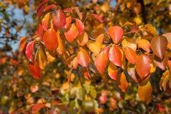 Dettaglio delle foglie di autunno arancio immagini stock