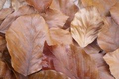 Dettaglio delle foglie di autunno sulla terra Priorità bassa della natura Immagini Stock Libere da Diritti
