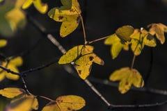 Dettaglio delle foglie nella foresta di La Herreria Fotografia Stock