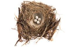Dettaglio delle uova dell'uccello in nido Immagini Stock Libere da Diritti