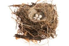 Dettaglio delle uova dell'uccello in nido Fotografia Stock Libera da Diritti