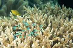 Dettaglio di corallo duro Immagini Stock Libere da Diritti