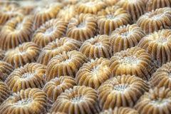 Dettaglio di corallo duro Fotografie Stock