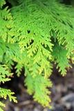Dettaglio di Cypress fotografie stock