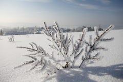Dettaglio di erba congelata Fotografie Stock Libere da Diritti