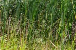 Dettaglio di erba verde e gialla Immagini Stock Libere da Diritti