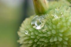 Dettaglio di goccia sulla pianta Fotografia Stock