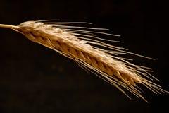 Dettaglio di grano immagini stock