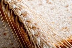 Dettaglio di grano fotografia stock