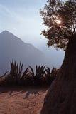 Dettaglio di Inca Trail a Machu Picchu nel Perù, Sudamerica Fotografie Stock