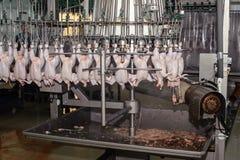 Dettaglio di industria alimentare con lavorazione della carne del pollame Fotografie Stock Libere da Diritti