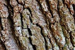 Dettaglio di legno della corteccia Fotografia Stock