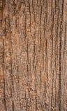 Dettaglio di legno della corteccia Fotografie Stock Libere da Diritti