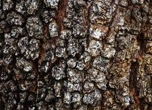Dettaglio di legno della crepa di struttura della corteccia Immagini Stock Libere da Diritti