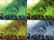 Dettaglio di muschio nel giorno piovoso Fotografia Stock Libera da Diritti