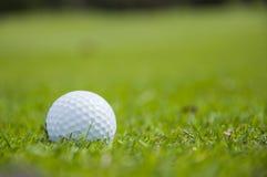 Dettaglio di palla da golf su erba Fotografia Stock
