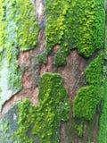 Dettaglio di struttura dell'albero muscoso immagini stock libere da diritti