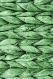 Dettaglio di struttura di Kelly Green Palm Fiber Place Mat Coarse Plaiting Rustic Grunge immagine stock