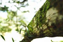 Dettaglio di un albero muscoso immagini stock