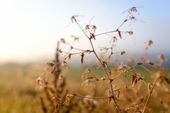 Dettaglio di un'erba fotografie stock