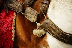 Dettaglio di una puntina del cavallo fotografia stock libera da diritti